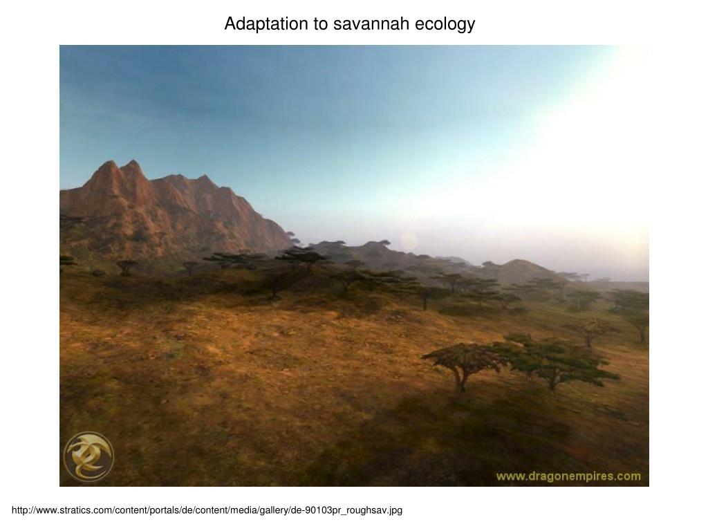 Adaptation to savannah ecology