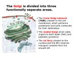 the golgi is divided into three functionally separate areas