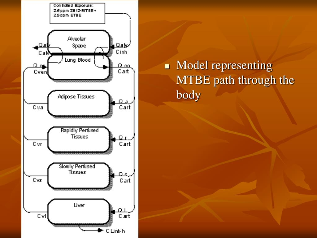 Model representing MTBE path through the body