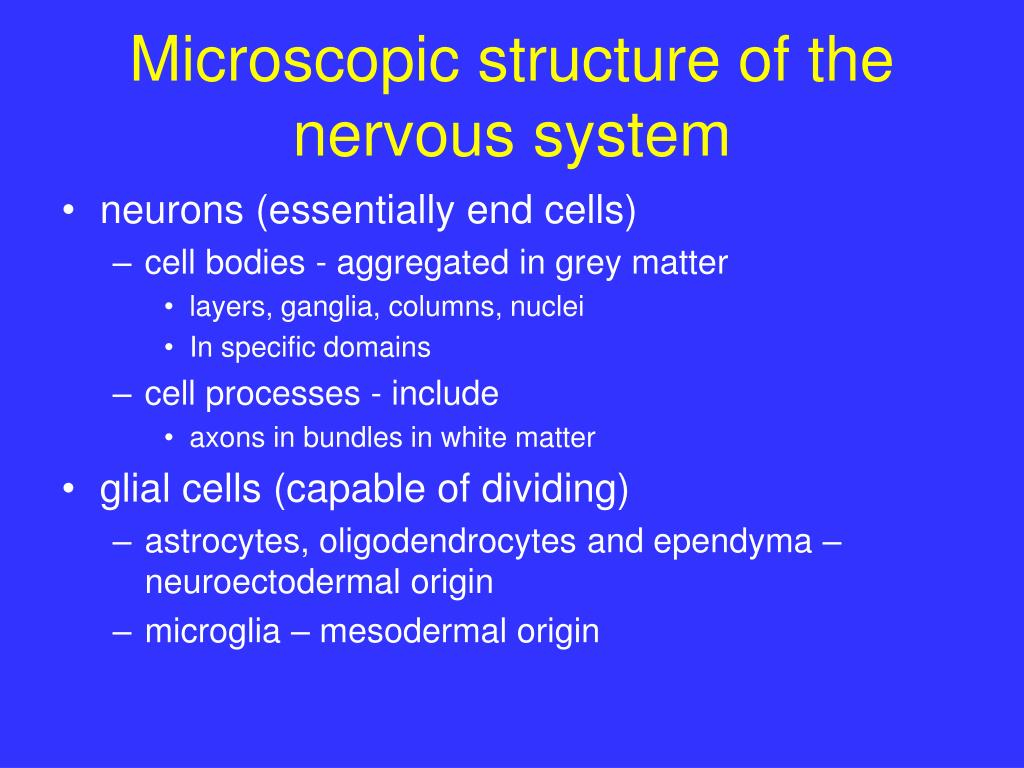 Microscopic structure of the nervous system