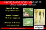 spring dead spot resistance critical south and transition