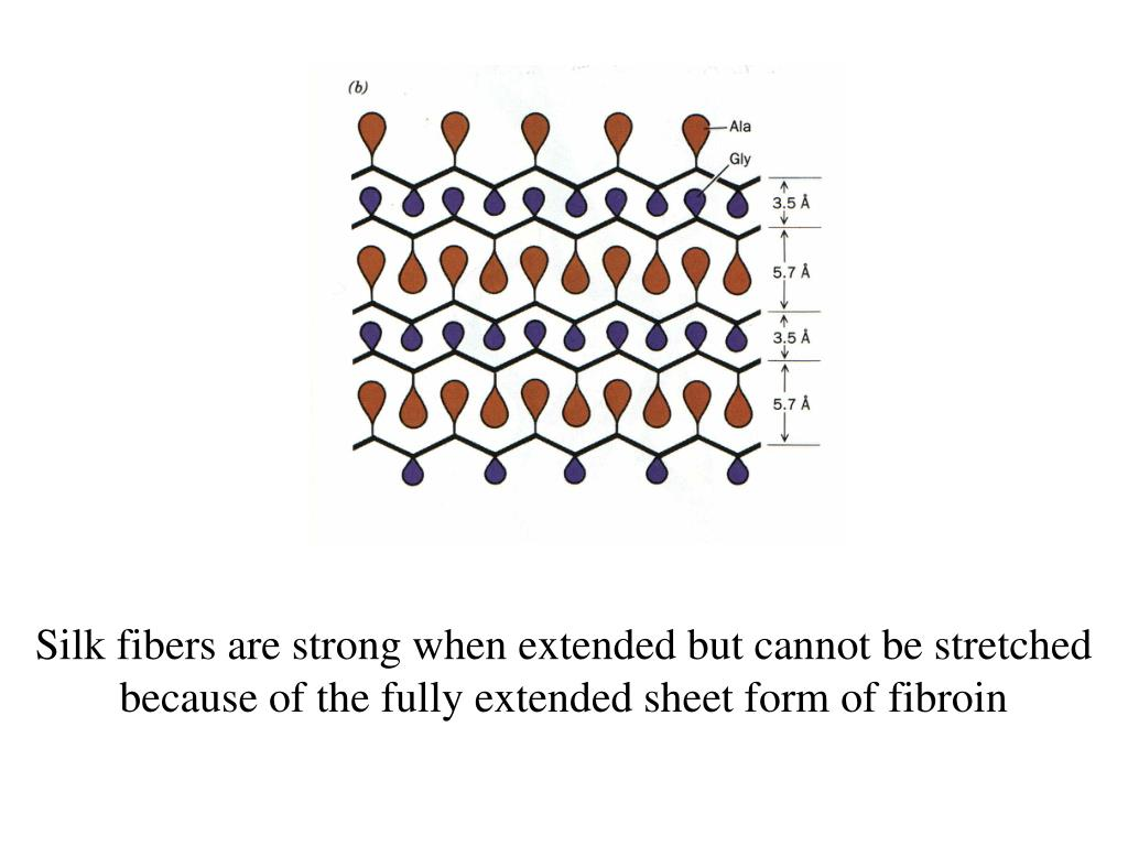 Silk fibers are strong when extended but cannot be stretched because of the fully extended sheet form of fibroin