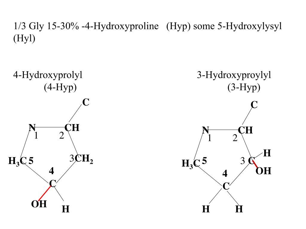 1/3 Gly 15-30% -4-Hydroxyproline (Hyp) some 5-Hydroxylysyl (Hyl)