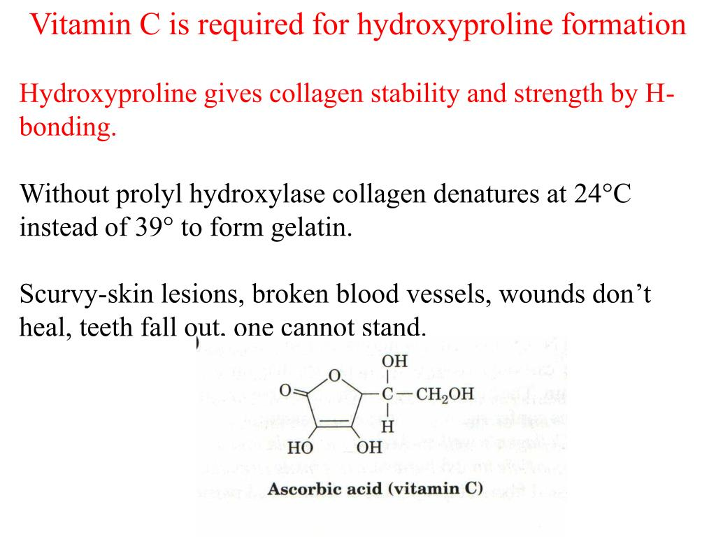 Vitamin C is required for hydroxyproline formation