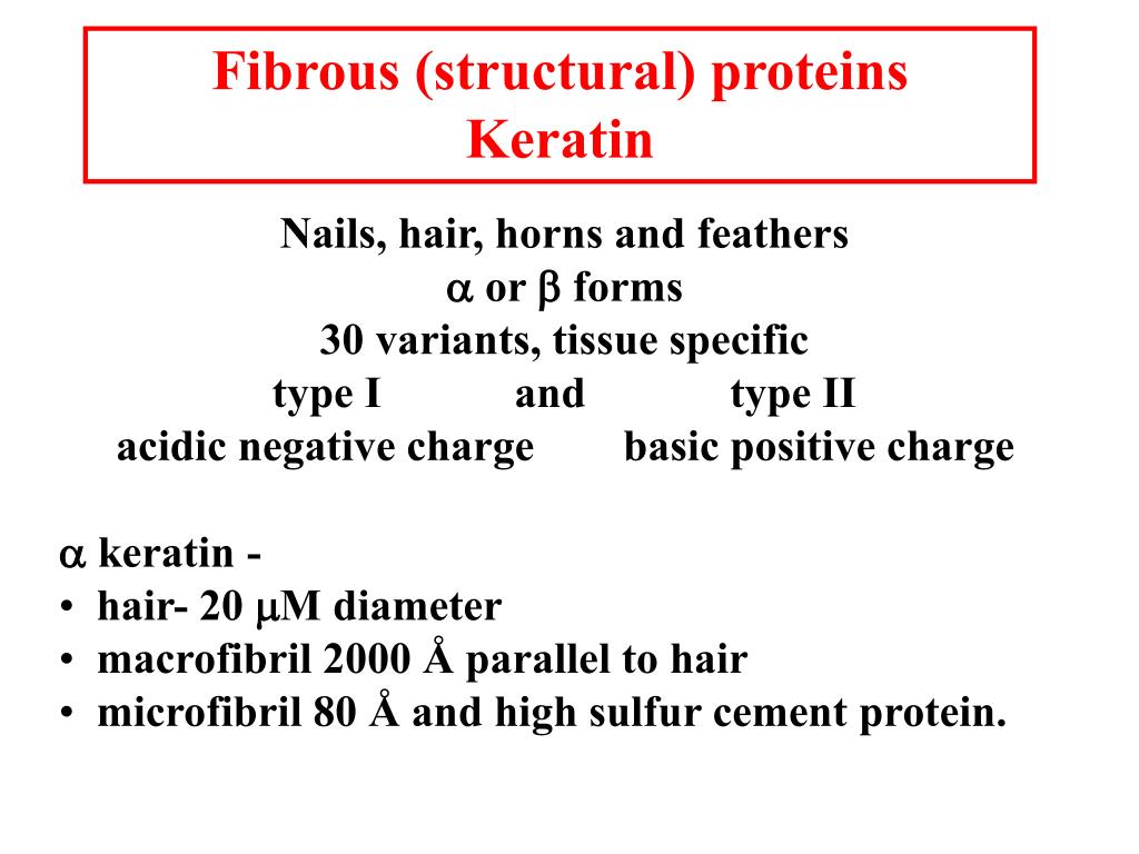 Fibrous (structural) proteins