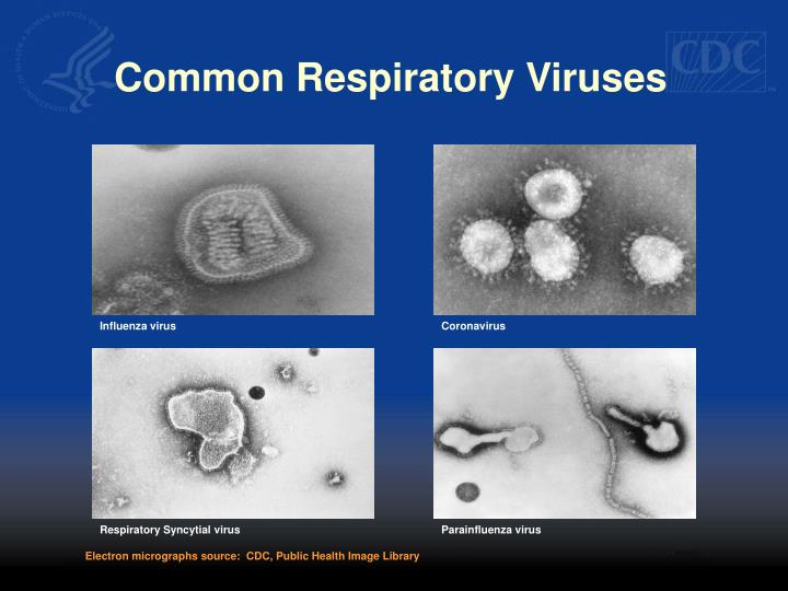 Common respiratory viruses