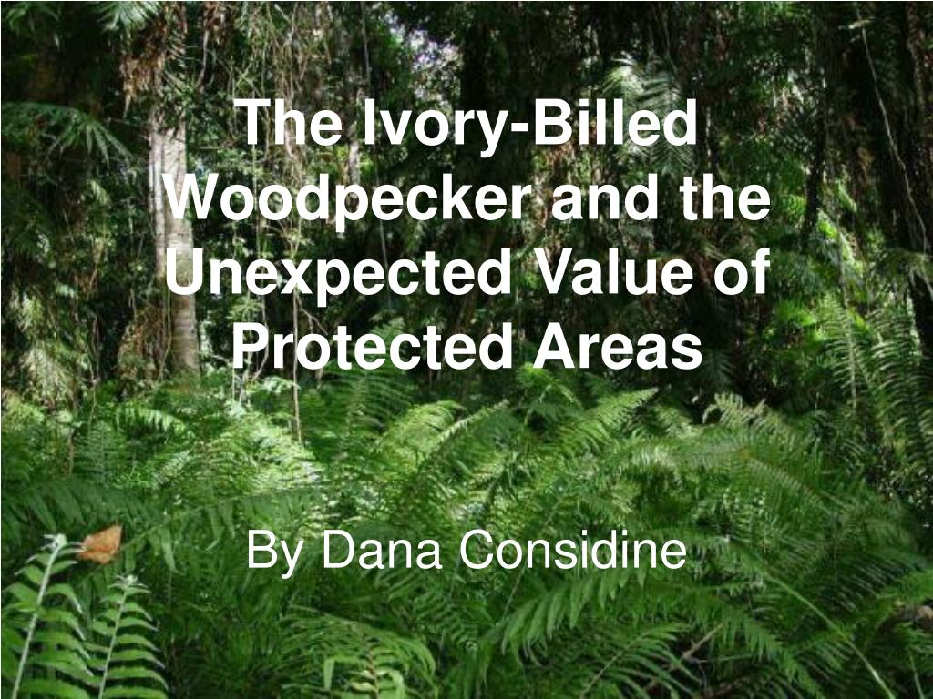 the ivory billed woodpecker and the unexpected value of protected areas l.