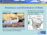 abundance and distribution of birds12