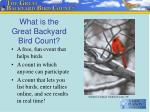 what is the great backyard bird count