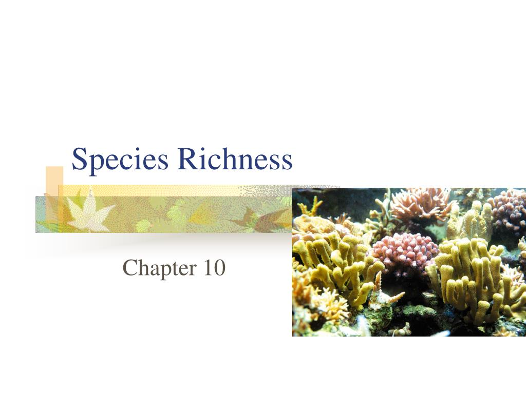 species richness l.