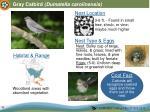 gray catbird dumatella carolinensis