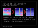 natural selection gene perspective11