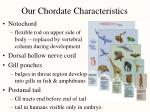 our chordate characteristics