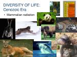 diversity of life cenozoic era