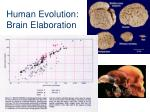 human evolution brain elaboration