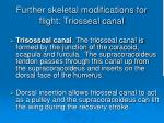 further skeletal modifications for flight triosseal canal