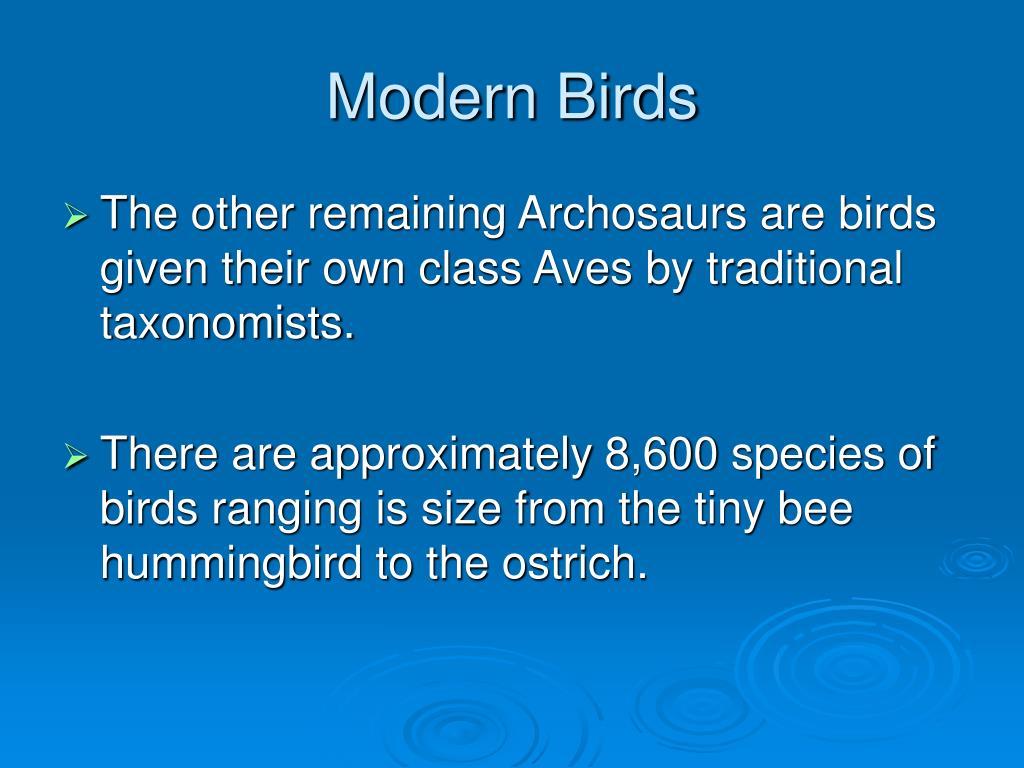 modern birds l.