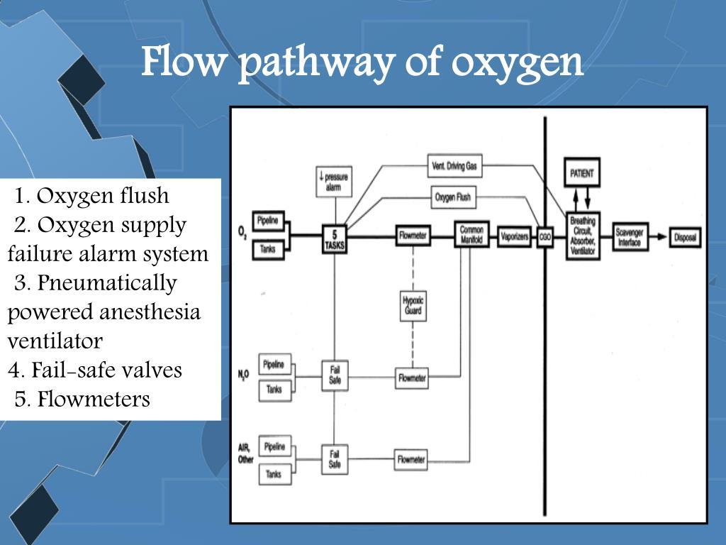 Flow pathway of oxygen