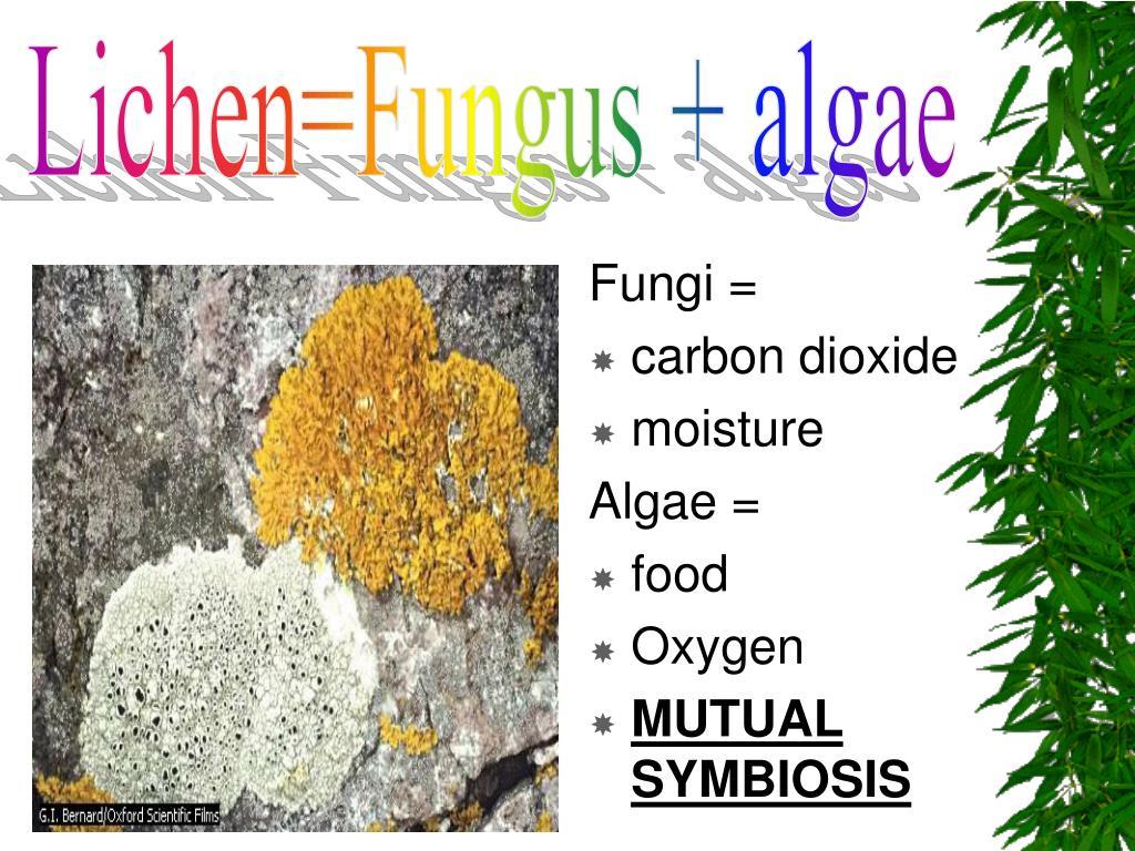 Lichen=Fungus + algae