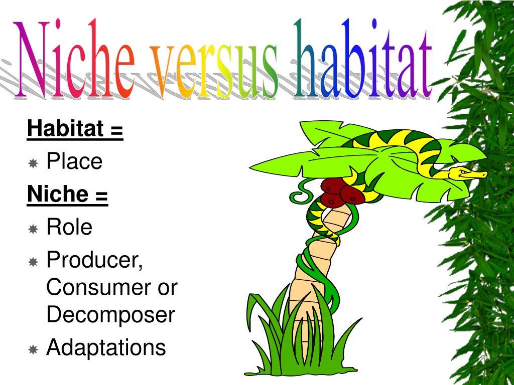 Niche versus habitat