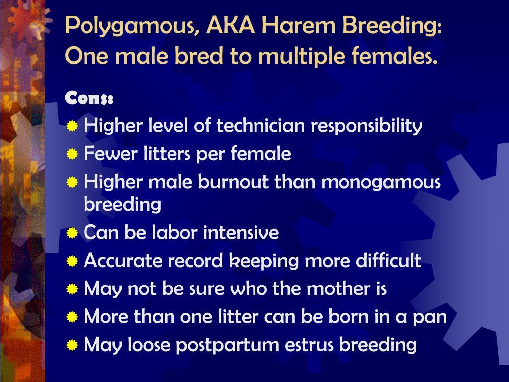 Polygamous, AKA Harem Breeding: