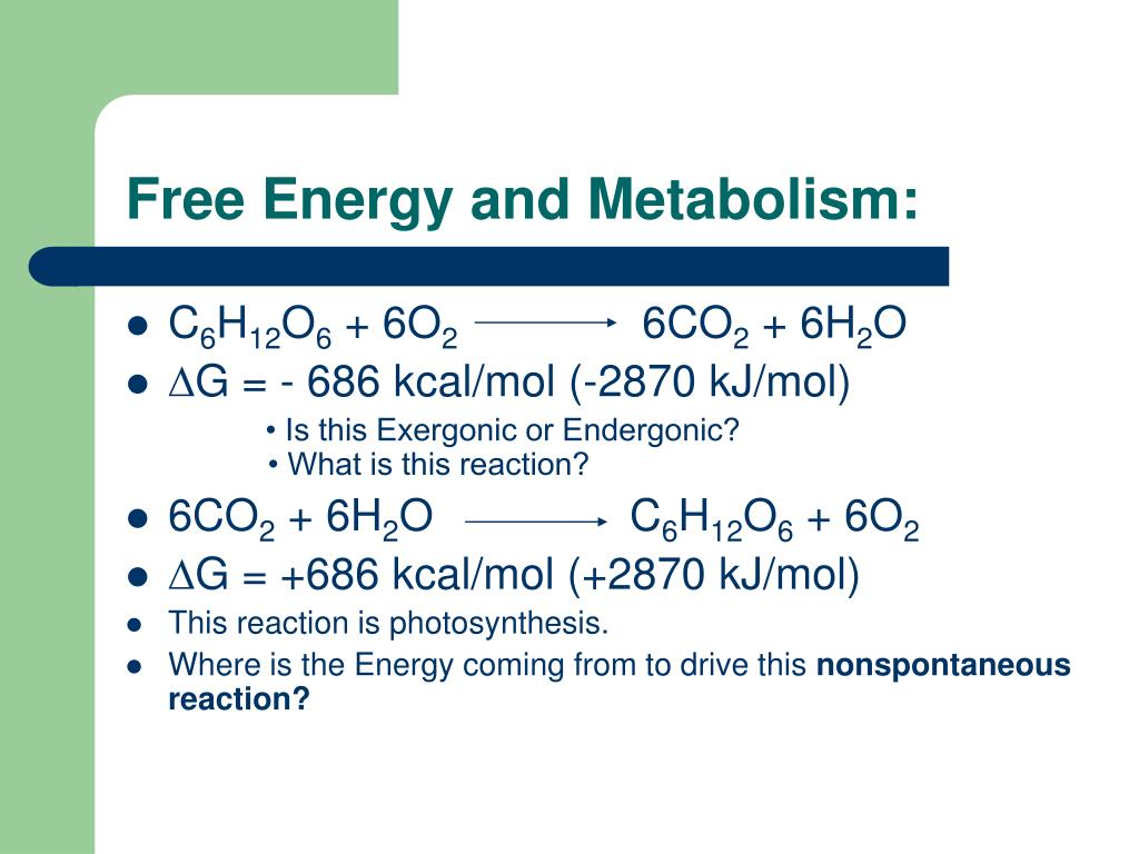 Free Energy and Metabolism: