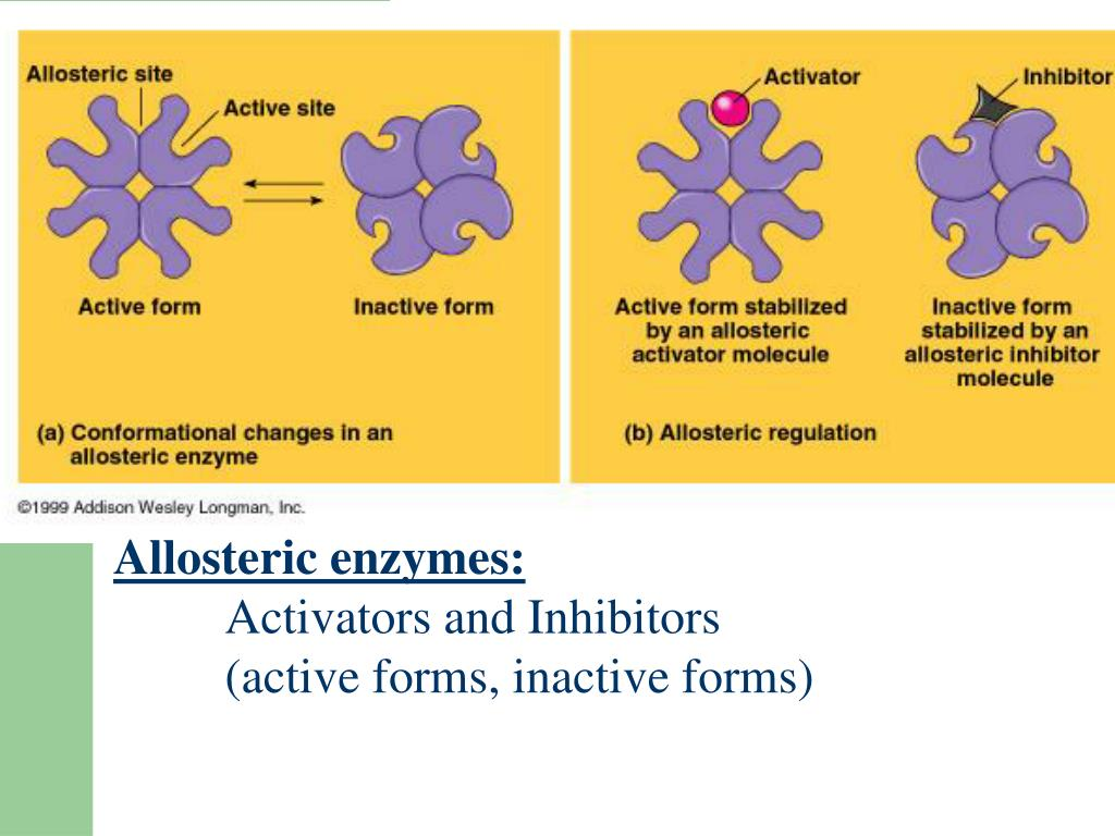 Allosteric enzymes: