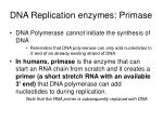 dna replication enzymes primase