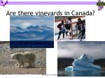 are there vineyards in canada