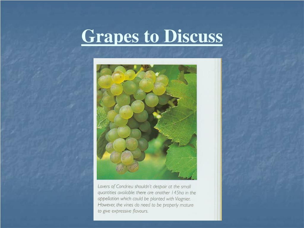 Grapes to Discuss