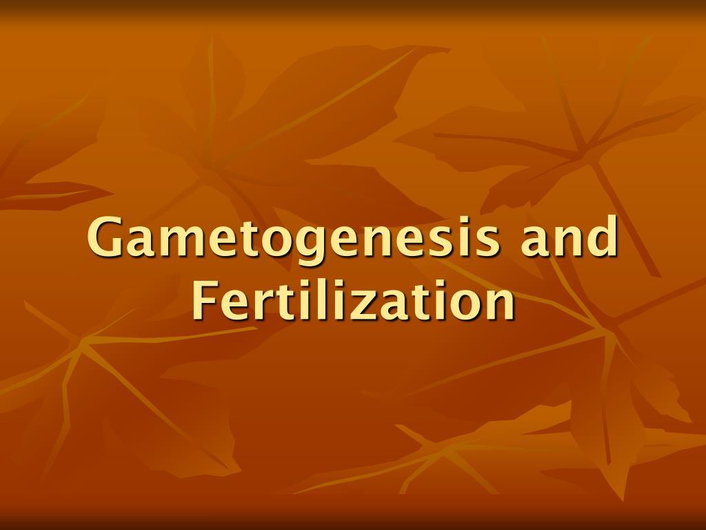 Gametogenesis and Fertilization