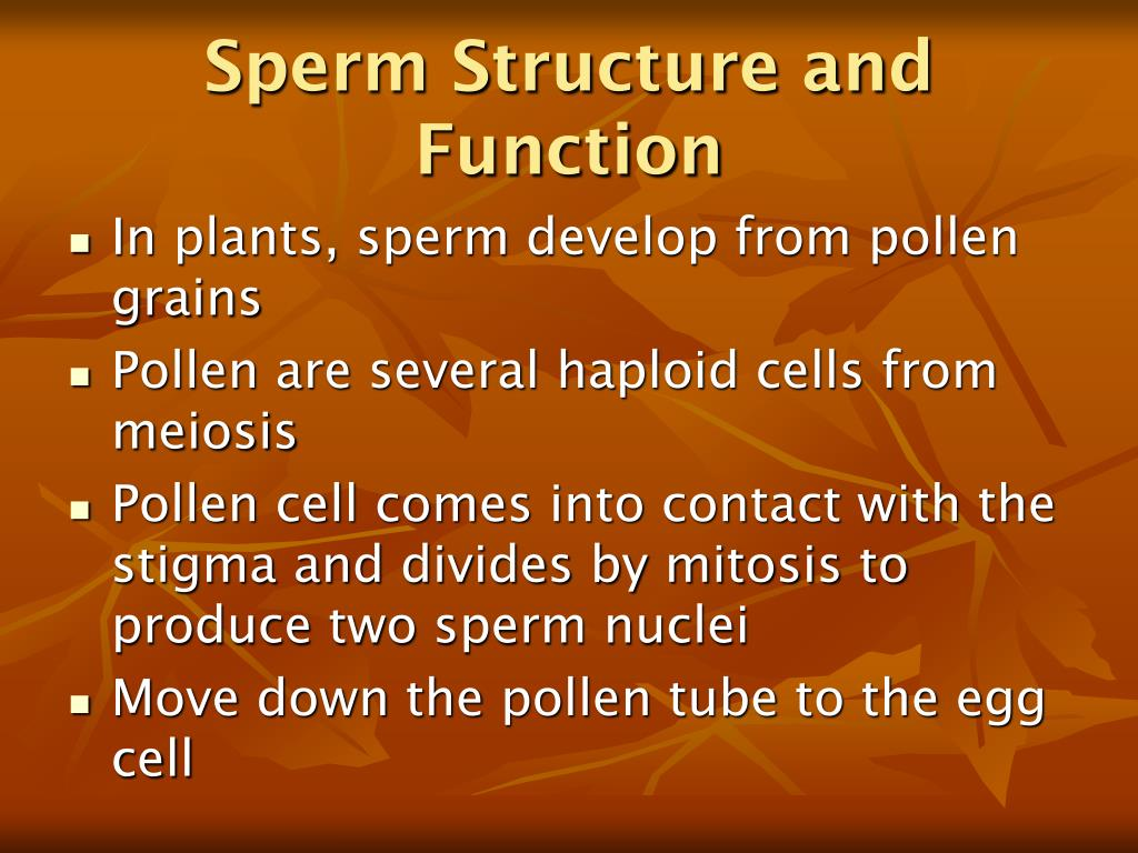Sperm Structure and Function
