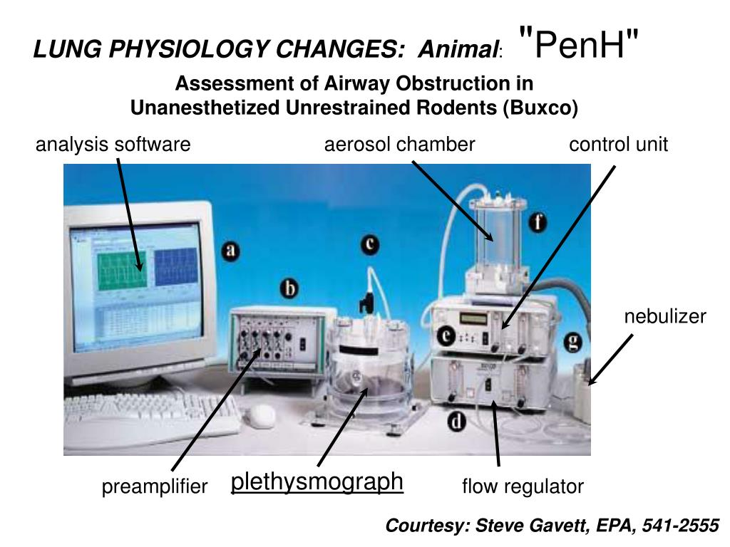 LUNG PHYSIOLOGY CHANGES:  Animal