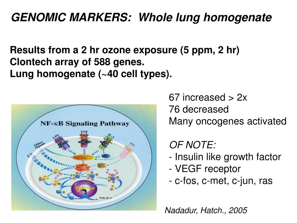 GENOMIC MARKERS:  Whole lung homogenate