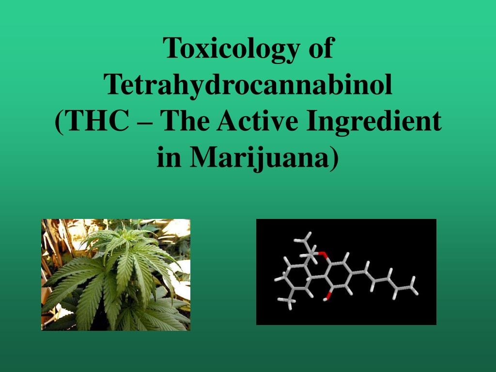 toxicology of tetrahydrocannabinol thc the active ingredient in marijuana l.