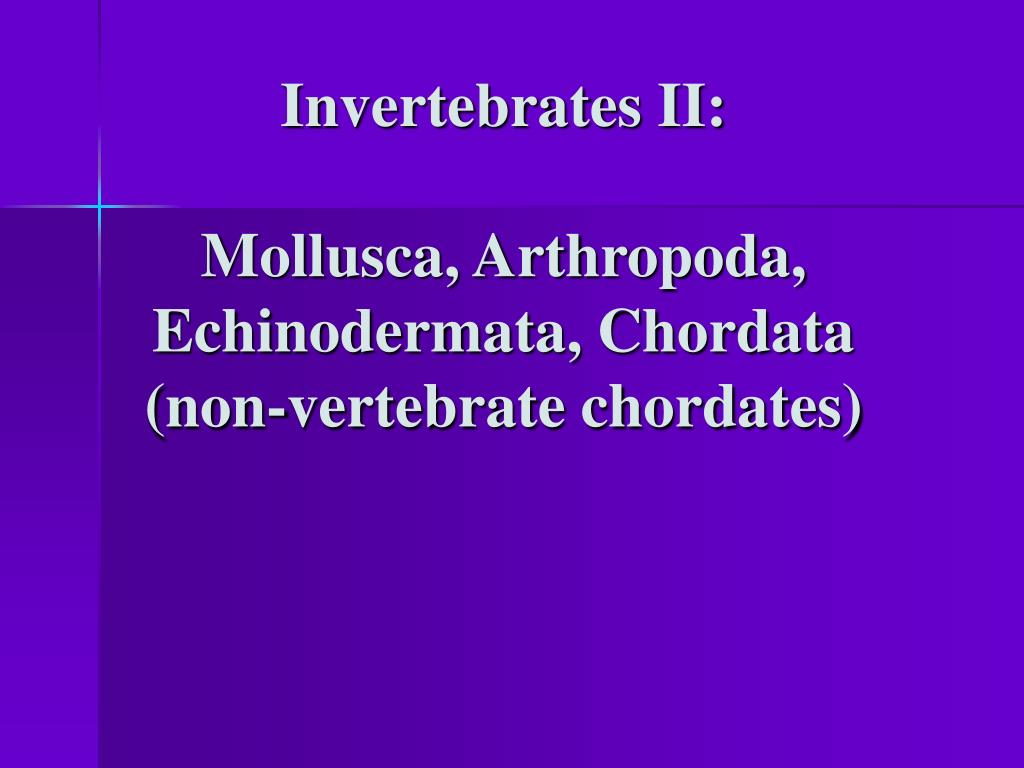 invertebrates ii mollusca arthropoda echinodermata chordata non vertebrate chordates l.