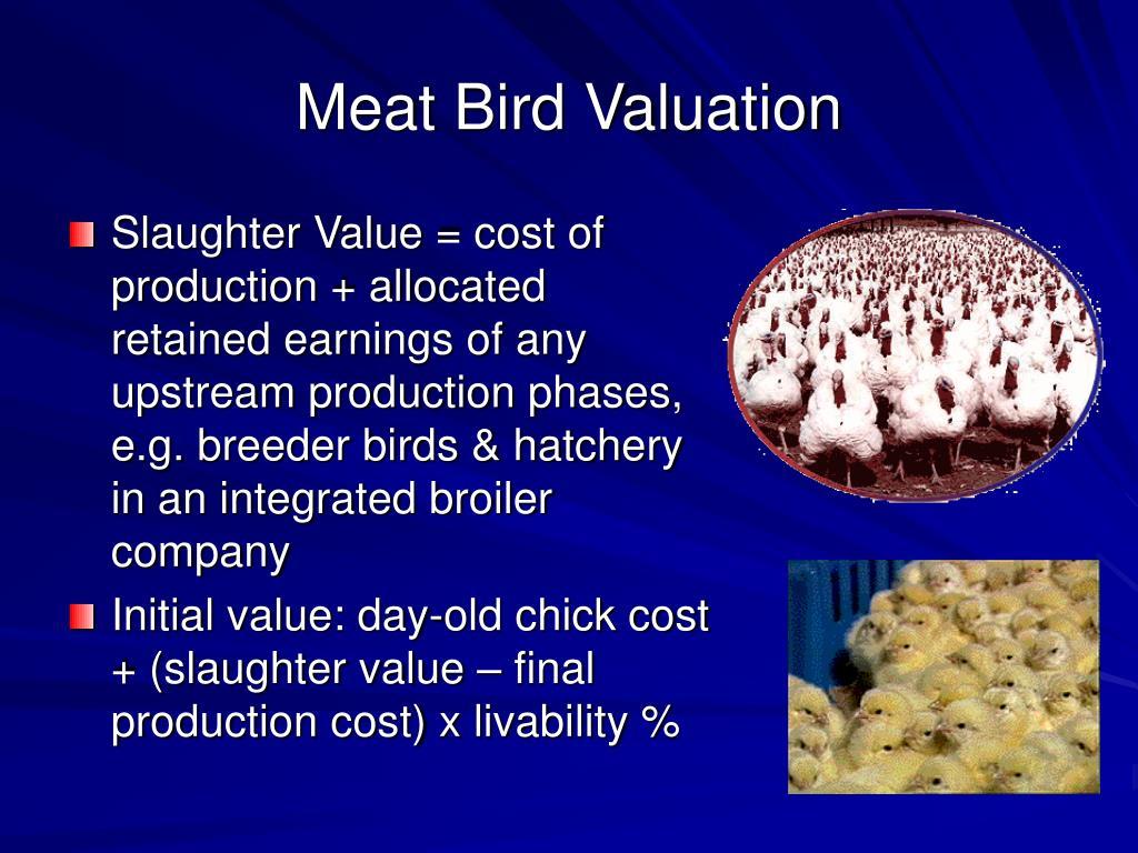 Meat Bird Valuation