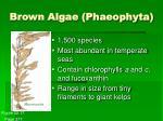 brown algae phaeophyta
