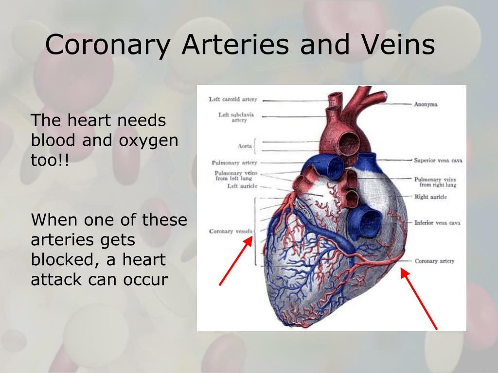 Coronary Arteries and Veins