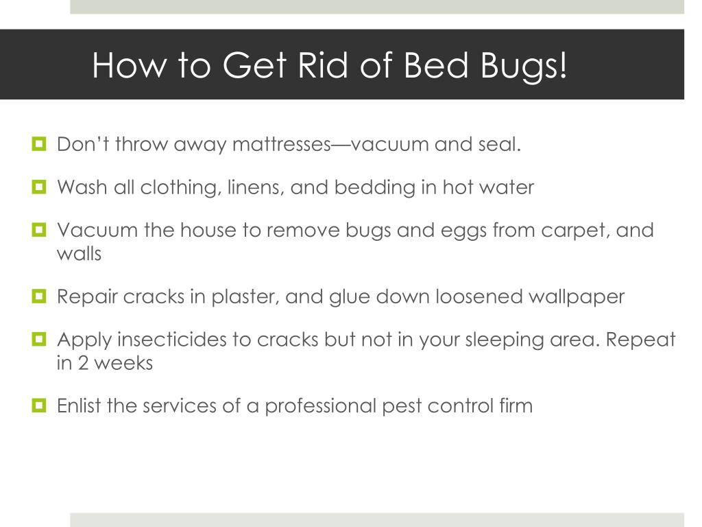 How to Get Rid of Bed Bugs!