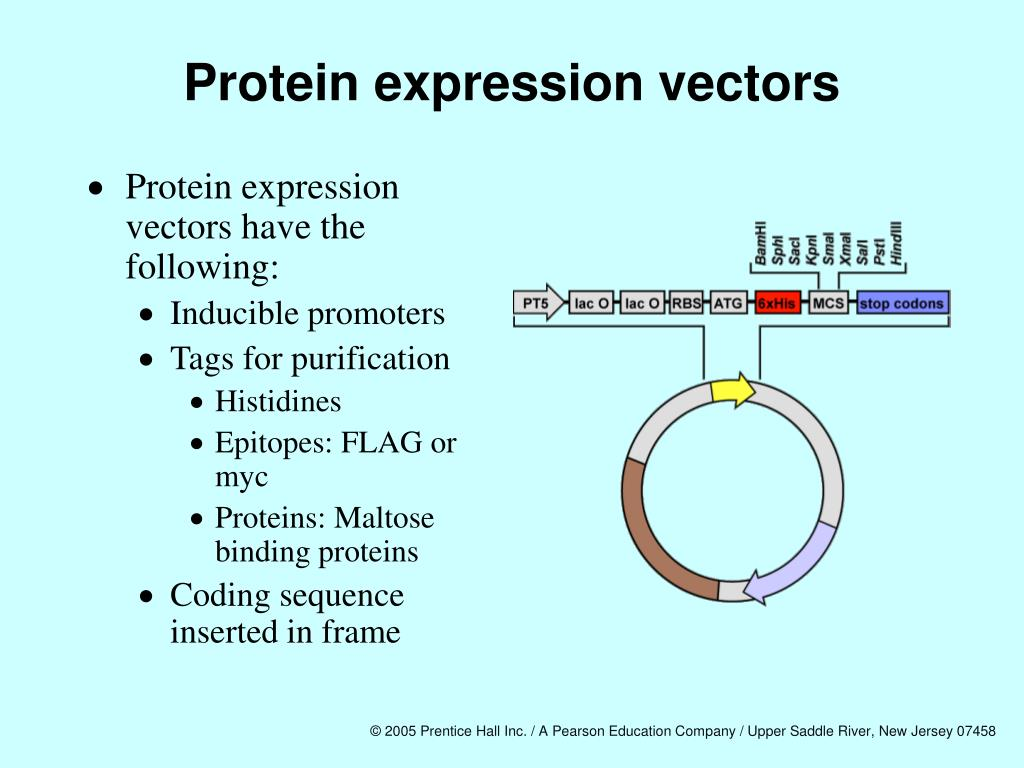 Protein expression vectors