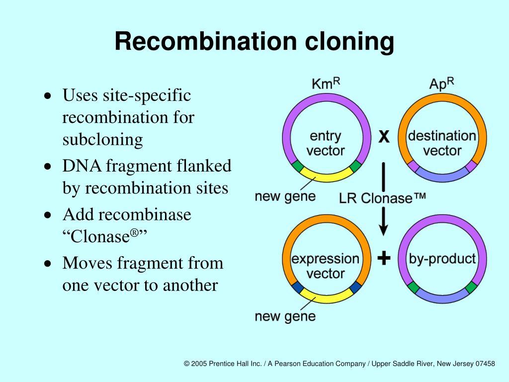 Recombination cloning