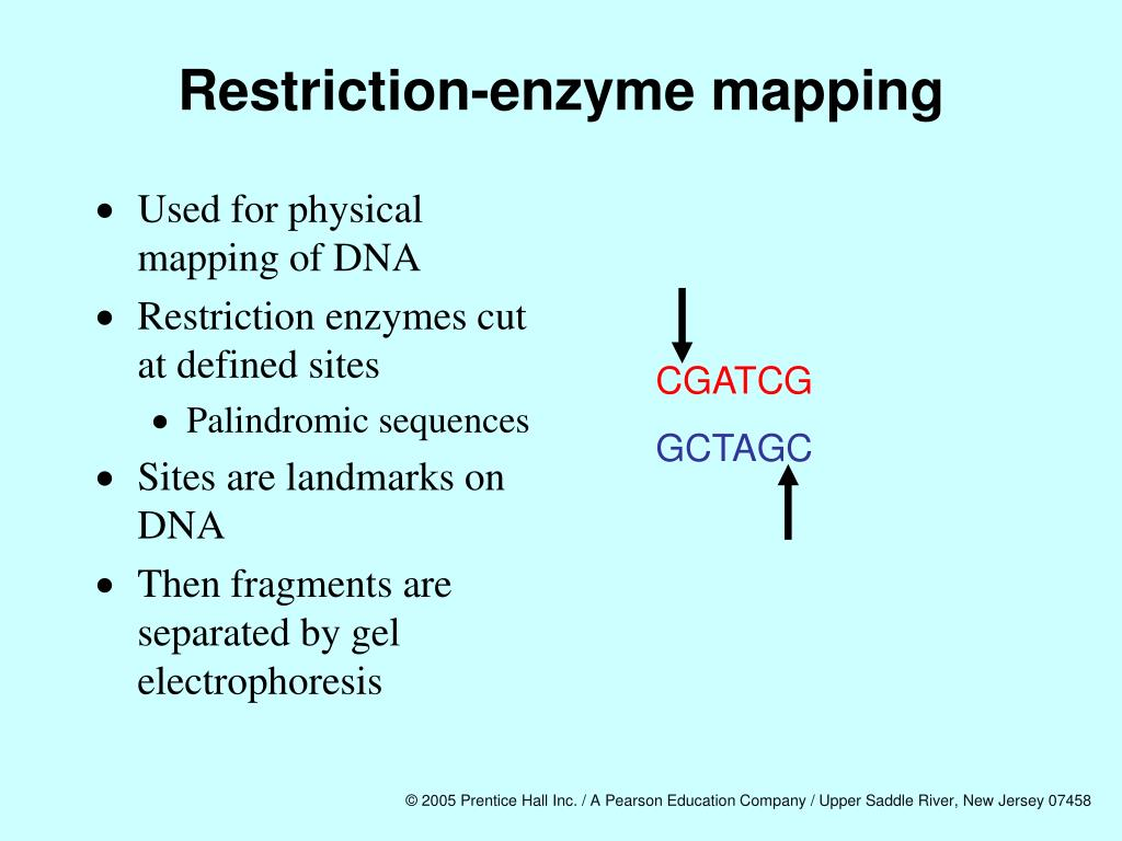 Restriction-enzyme mapping