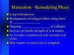 maturation remodeling phase26