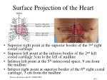 surface projection of the heart