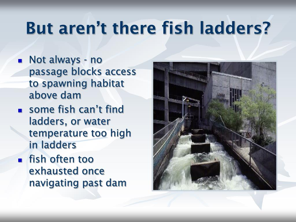 But aren't there fish ladders?