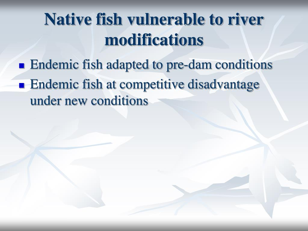 Native fish vulnerable to river modifications