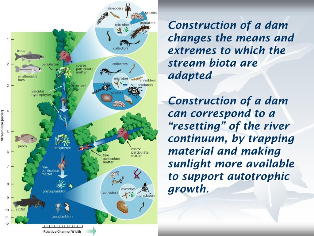 Construction of a dam changes the means and extremes to which the stream biota are adapted