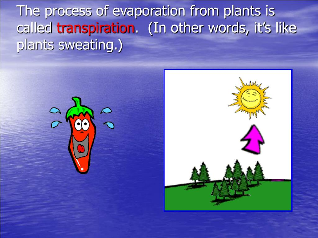 The process of evaporation from plants is called