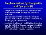 emphysematous pyelonephritis and pyocystis 4